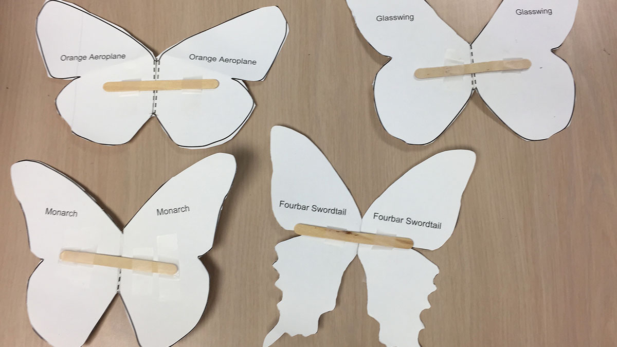 STEM-ify Me: It's Elementary! Designing Butterfly Wings